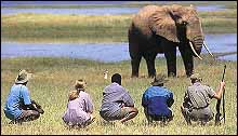 Fothergill Safari Lodge, Matusadona, Zimbabwe - Walking Safari