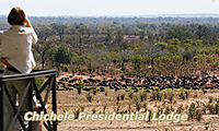 Special offers, Botswana and Zambia Safaris