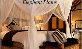 Elephant Plains Safari Lodge,Safari Packages from Johannesburg
