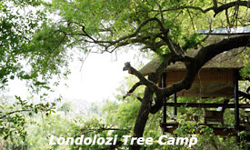 Londolozi Tree Camp, Londolozi Private Game Reserve