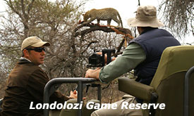 Photographic Safari at Londolozi Private Game Reserve, Sabi Sands, South Africa, Safari Packages