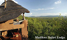 Madikwe Safari Lodge Packages from Johannesburg, Lion at Madikwe