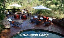 Sabi Sabi Little Bush Camp, the Pool