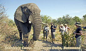 Sanctuary Retreats Stanleys Camp Elephant Interaction, Safari packages Botswana & Zambia
