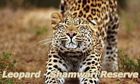 Shamwari Private Game Reserve, Shamwari Safari Lodges