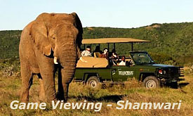 Shamwari Bushmans River Lodge, Safari Drive at Shamwari Game Reserve