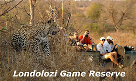 Luxury African Safari Lodges and Safari Camps, Londolozi Game Reserve, Sabi Sands, South Africa