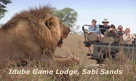 Idube Game Lodge, Sabi Sands, South Africa, Luxury African Game Lodges and Safari camps, African Safari Lodges