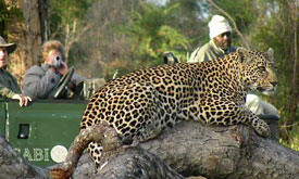 Sabi Sabi Reserve, South Africa, African Safari Vacations, African Safaris, Vacation in Africa
