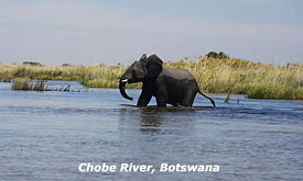 Botswana Safari Destinations, Elephant Crossing the Chobe River, Chobe National Park