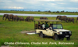 Botswana Safari Vacations, Elephants on teh Chobe River, Chobe National Park in Botswana