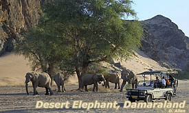 Damaraland, Desert Elephant,Namibia Safari Destinations, Namibia Tours & Safari Vacations