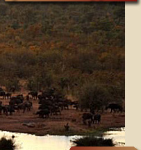 Hwange National Park, Safari packages from Victoria falls