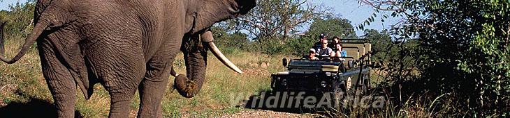 African Safari Vacations, African Safaris and Vacations in Africa provided by Wildlife Africa Safaris, a South African based toru operator specialized in African Safari Destinations