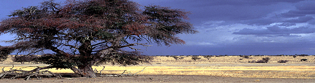 The Kalahari Desert Botswana, Safari Packages to Central Kalahari