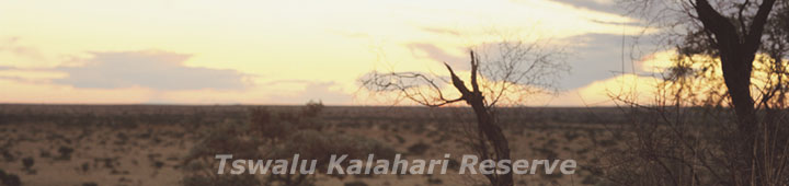 Tswalu Kalahari Reserve - safari packages to Tswalu, Travel Deals and special offers