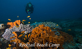 Rocktail Beach Camp, scuba Diving