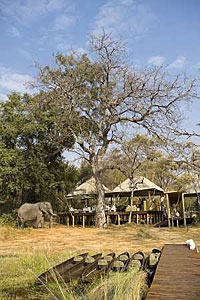 Botswana Safari, Elephant at Xaranna Tented Camp