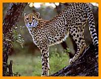 African Safaris, South Africa Safari Trips, Kruger National park