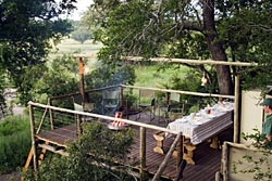 Plains Camp, Rhino Walking Safaris in Kruger National Park