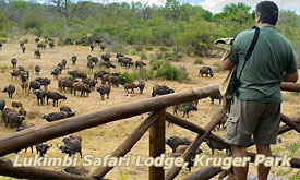african-wildlife-safaris6