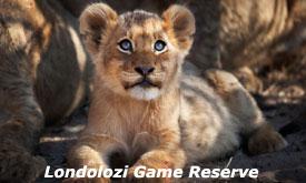 londolozi-game-reserve10