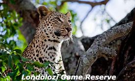 londolozi-game-reserve6