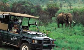 pilanesberg-safaris4