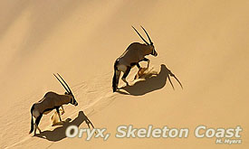 namibia-safaris-vacations3