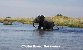 botswana-safaris3