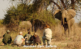 norman-carr-safaris19