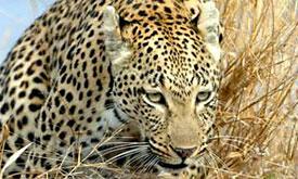 andbeyond-botswana-safari2