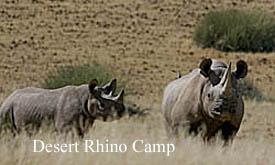 Desert-Rhino-Camp-3---M