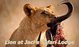 jacis-safari-lodge5