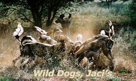 jacis-safari-lodge7