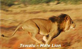 tswalu12