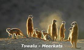 tswalu14