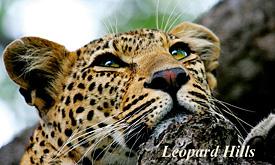 leopardhills2