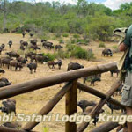 lukimbi-safari-lodge1