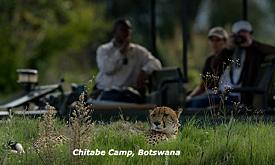 wilderness-chitabe2