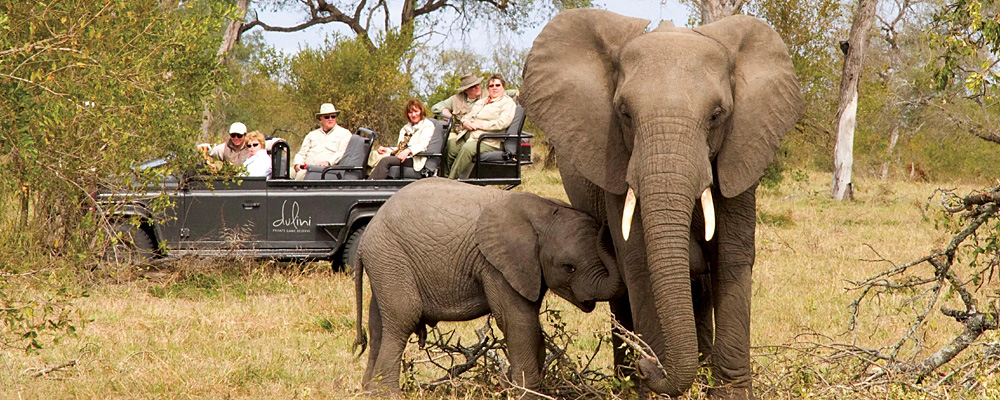 Holiday Destinations Luxury South Africa | Wildlife Africa
