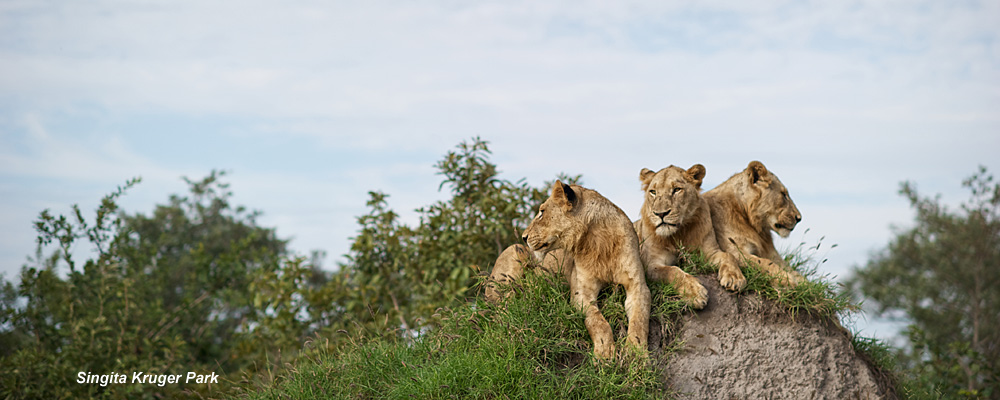 Singita Luxury Safaris Wildlife Africa - Singita-luxury-african-game-reserve