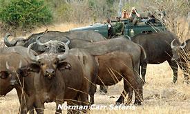 norman-carr-safaris21