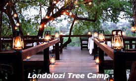 Londolozi-tree-camp5