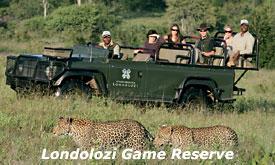 londolozi-game-reserve12