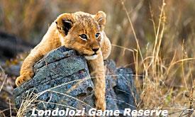londolozi-game-reserve13